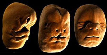 İnsan Vücudunun Anne Karnındaki Oluşumu